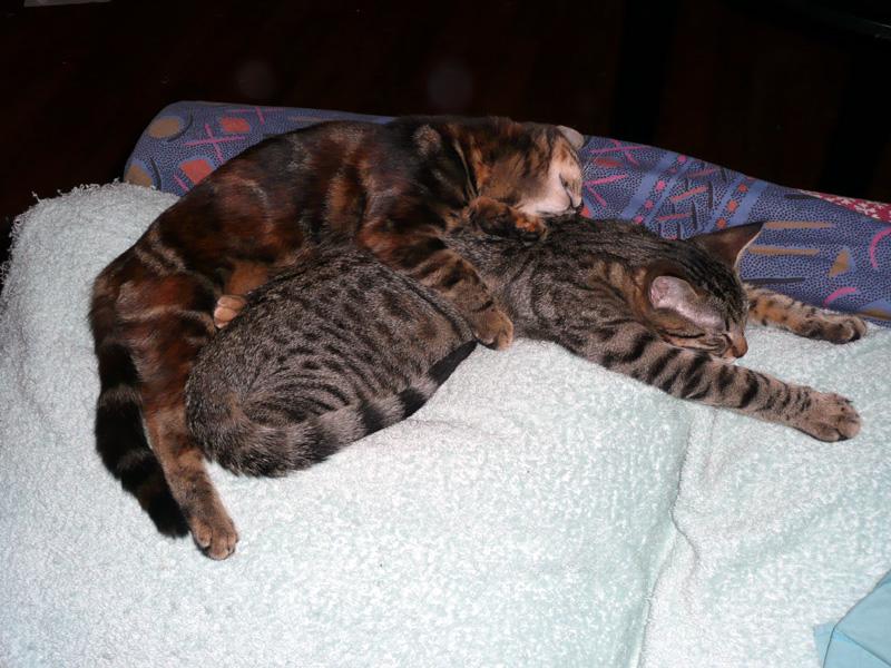 Bella et Barnabé, 4 mois