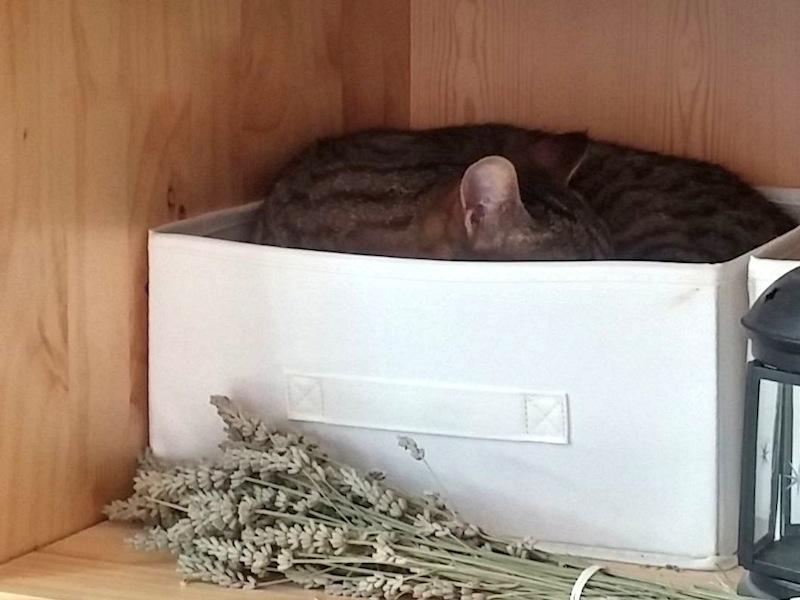 Barnabé dormant dans une boite