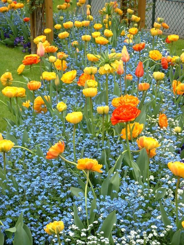 fleurs dans un jardin communal au mois d'avril
