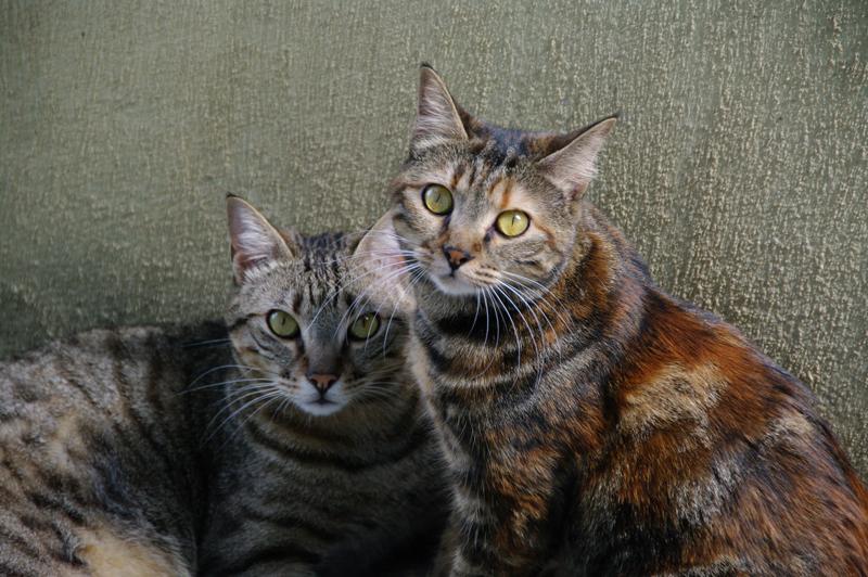 Bella et Barnabé, 2 ans