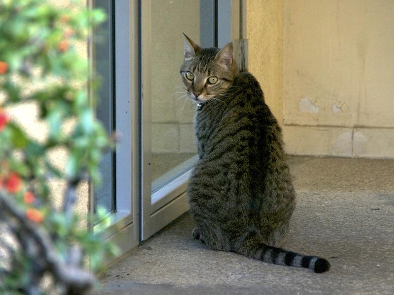 Barnabé, assis devant la porte
