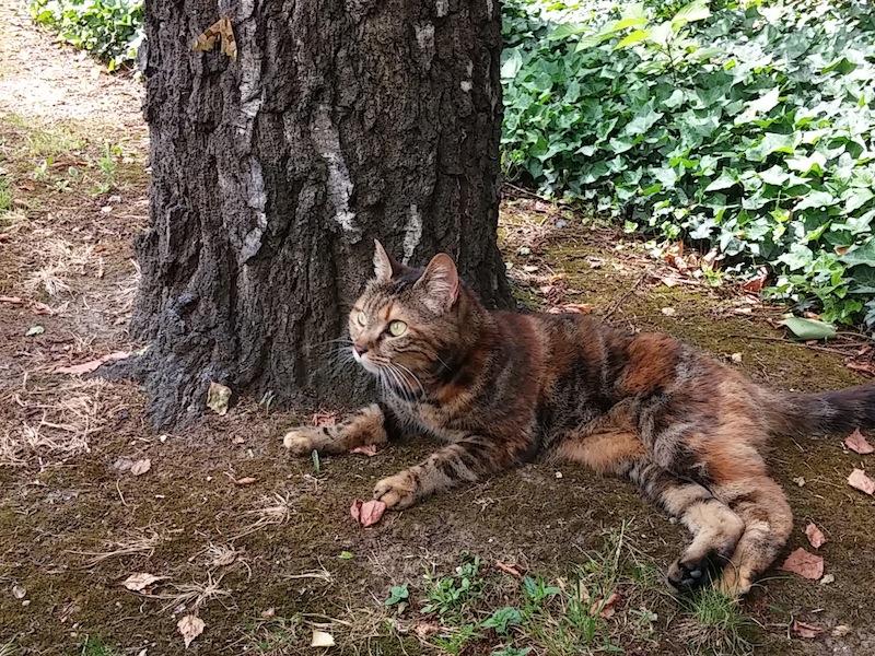 Bella, au pied d'un arbre