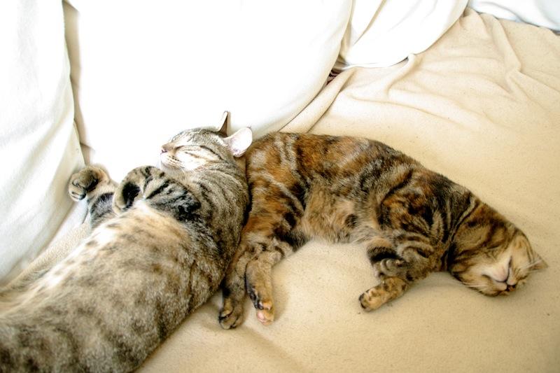 Bella et Barnabé faisant la sieste