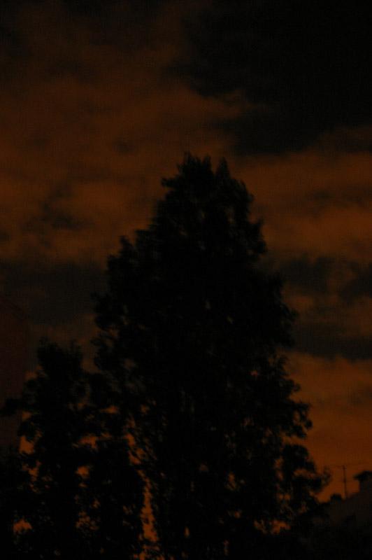 arbre sur fond rouge